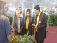 بازدید قاسمی شهردار دابودشت ازدومین نمایشگاه تخصصی گل و گیاه در شهرستان آمل