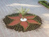 اجرای  طرح فضای سبز در حیاط شهرداری