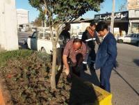 بازدید مهدوی شهردار دابودشت از گل کاری فضای سبز سطح شهر