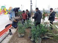 گل کاری پارک شهر دابودشت