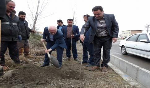 کاشت نهال چنار همزمان با هفته منابع طبیعی و روز درختکاری در شهر دابودشت با حضور شهردار و شورای اسلامی