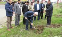 آیین درختکاری در شهر دابودشت با حضور شهردارو اعضا شورای اسلامی شهر